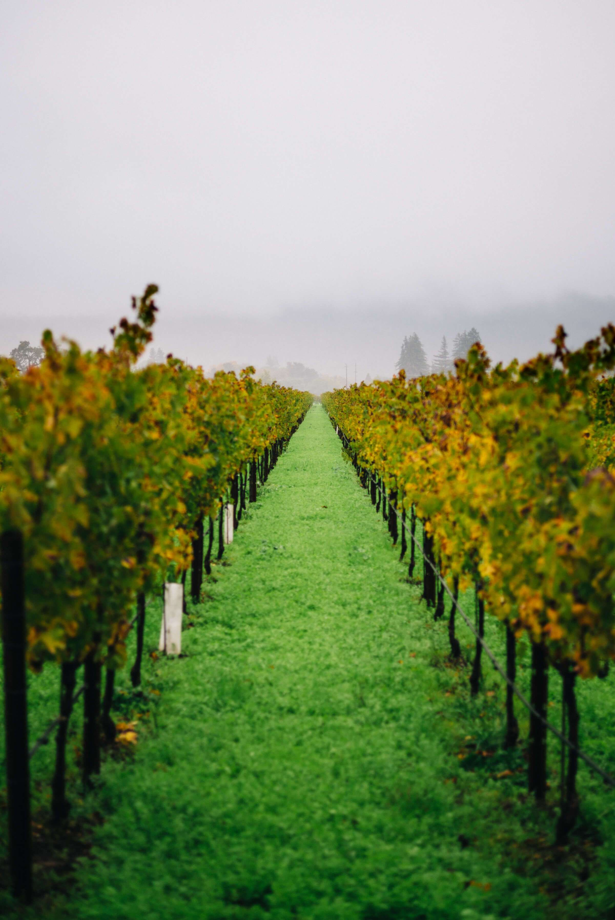 Insider S Guide To Napa Valley Plus Wine Tasting Guide Margaret River Wineries Napa Valley Wineries Napa Wineries