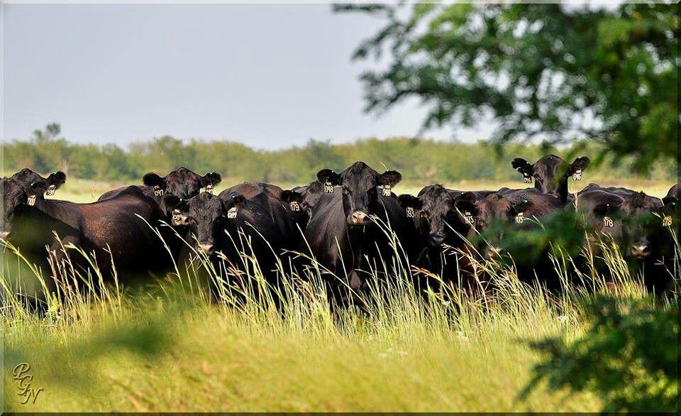 No es trabajo, es un estilo de vida. #Ganadería #Agricultura