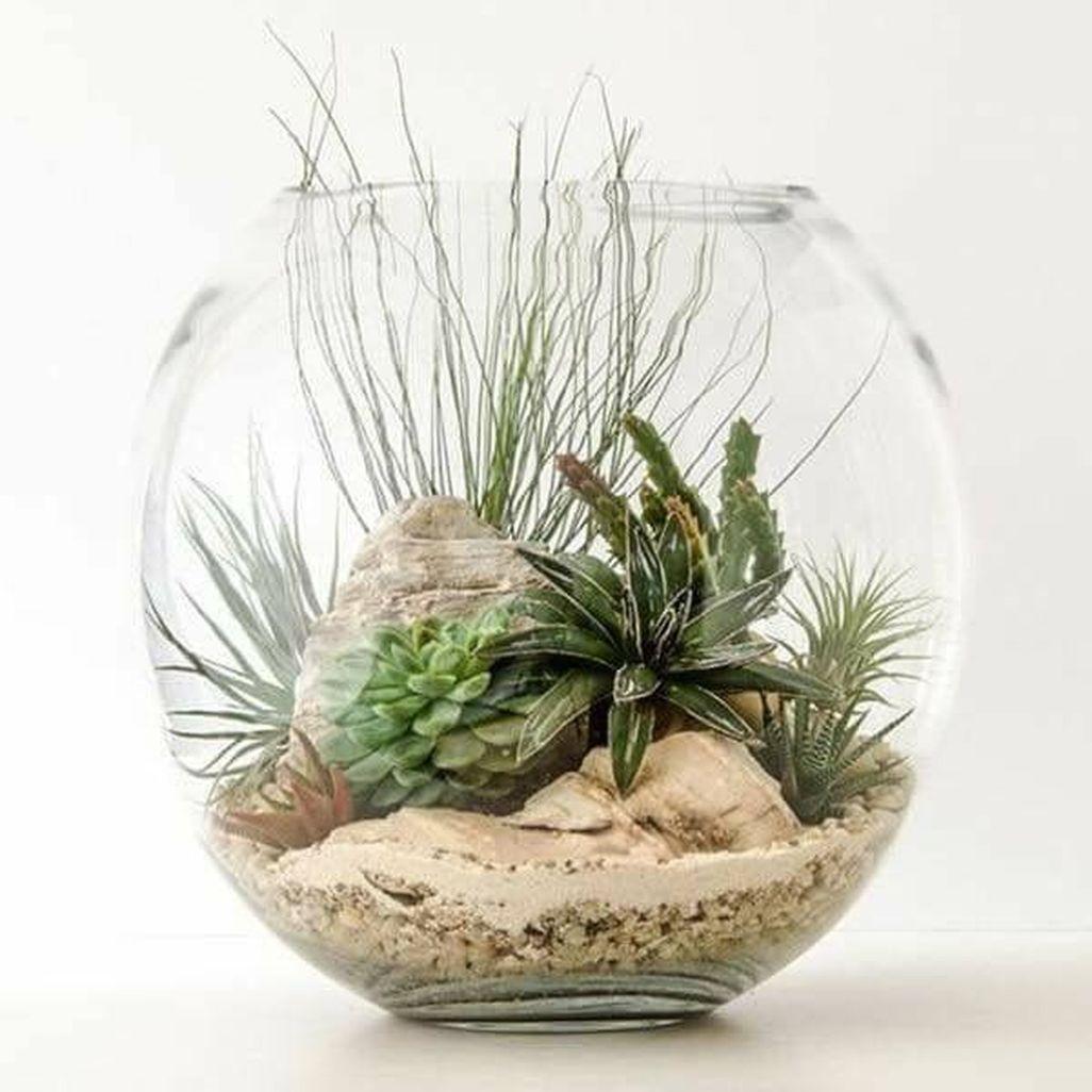 41 Amazing Air Plants Decor Ideas Air plants decor, Air