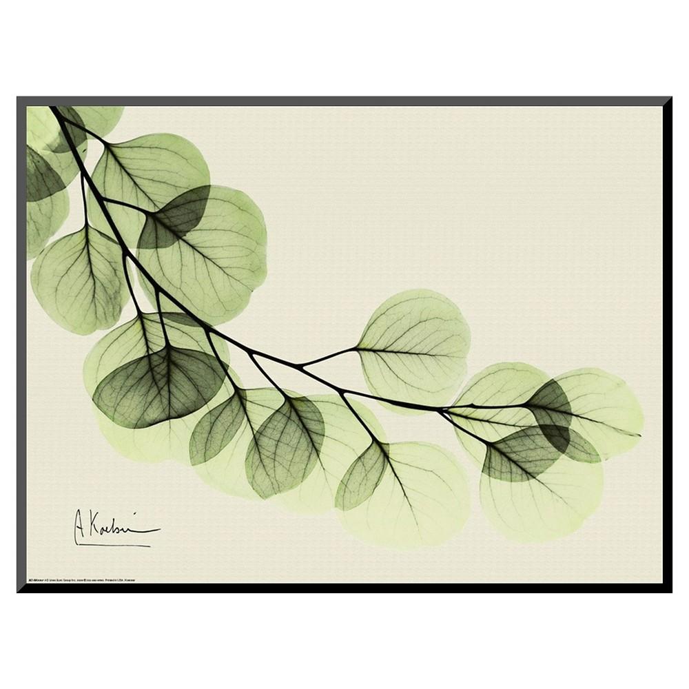 Art.com Sage Eucalyptus Leaves II by Albert Koetsier - Mounted Print ...
