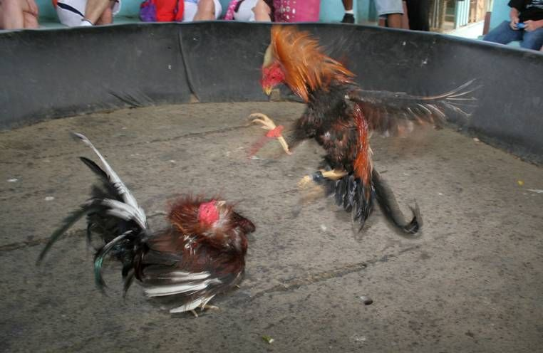 Mexico Fights Chicken