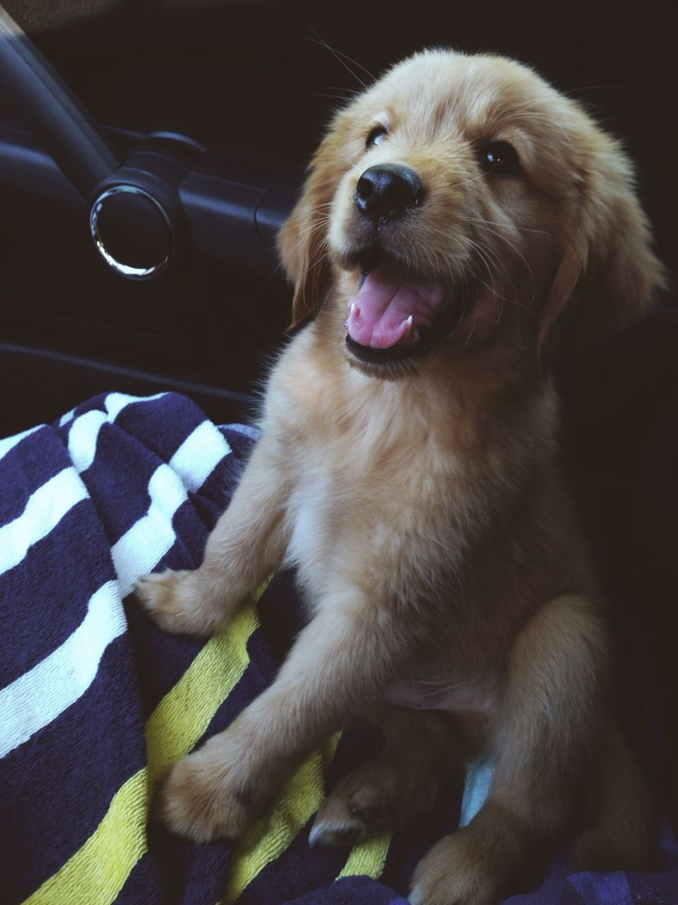 Golden retriever puppy tumblr