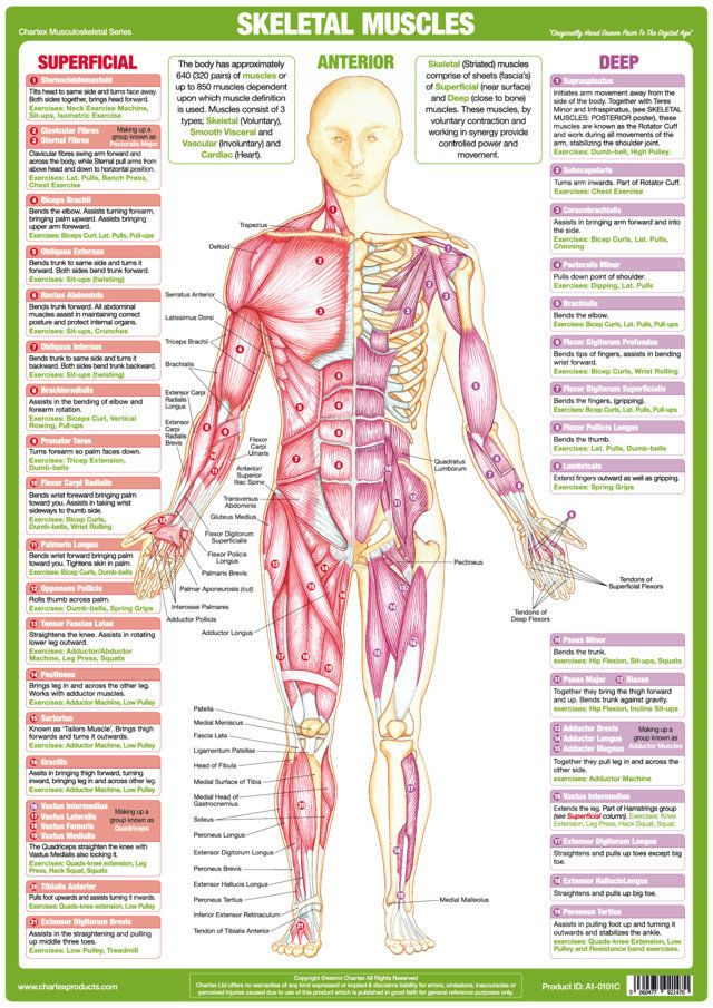 Pin by Chartex Ltd on Anatomy  Medical Charts  Posters Pinterest
