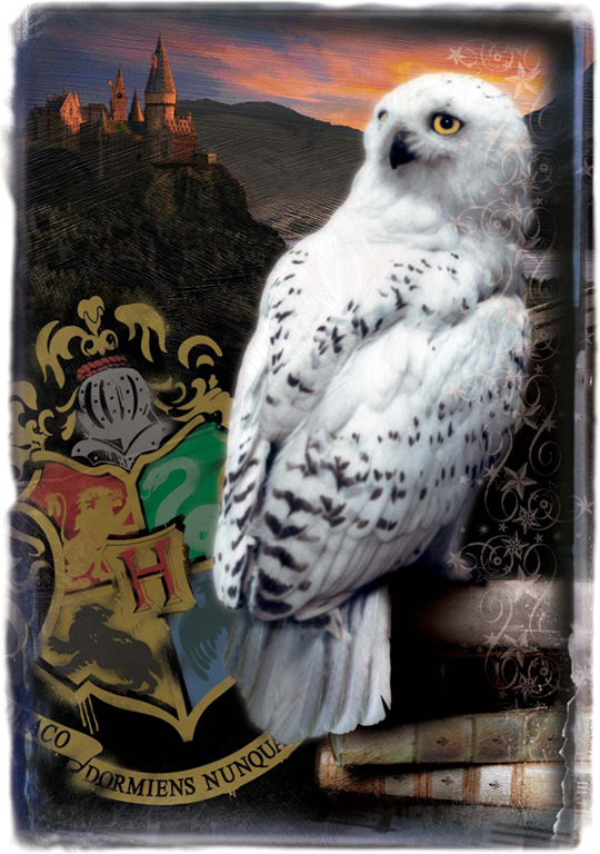 Scenes Hedwig Harry Potter Movie Warner Bros Entertainment Inc Harry Potter Publishing Right Harry Potter Owl Harry Potter Puzzle Harry Potter Owl Name