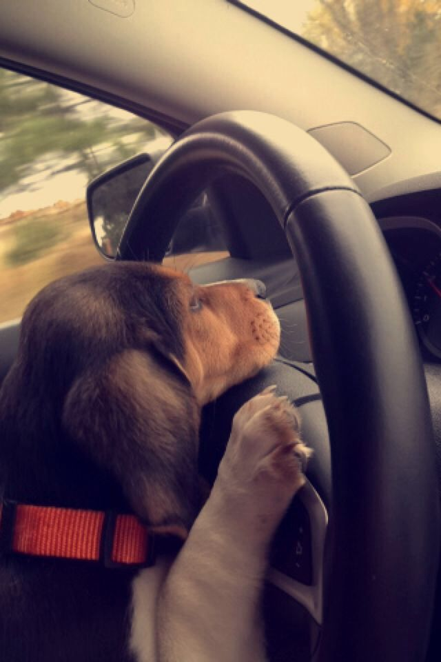 Copper taking the wheel..