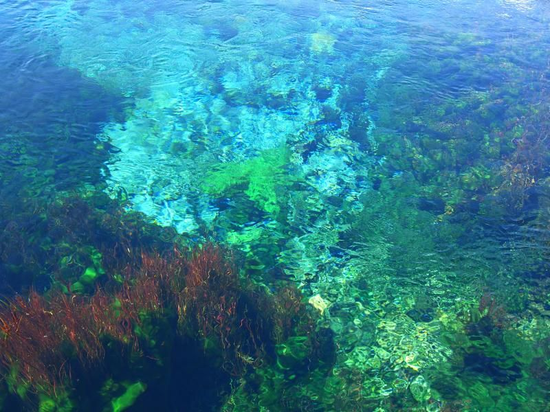 Crystal Clear Pupu Springs With Images Water Art Florida City New Zealand