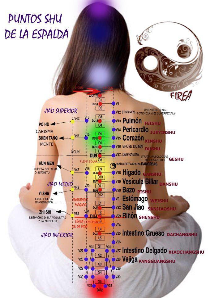Puntos shu de la espalda | Salud | Pinterest | Espalda, Dolor de ...