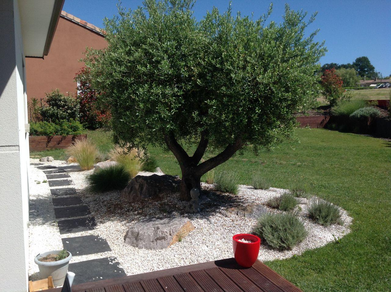 notre olivier ! | jardin | pinterest | jardins, extérieur et déco jardin