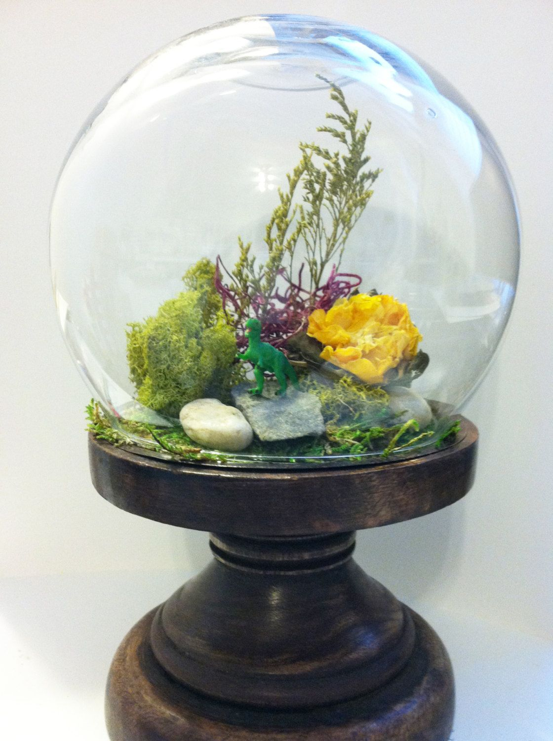 Diy terrarium kit glass dome on wood stand merchandising