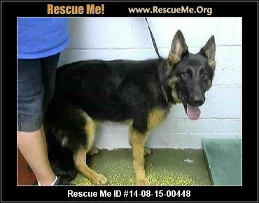 Georgia German Shepherd Rescue Adoptions Rescueme Org Dogs 3