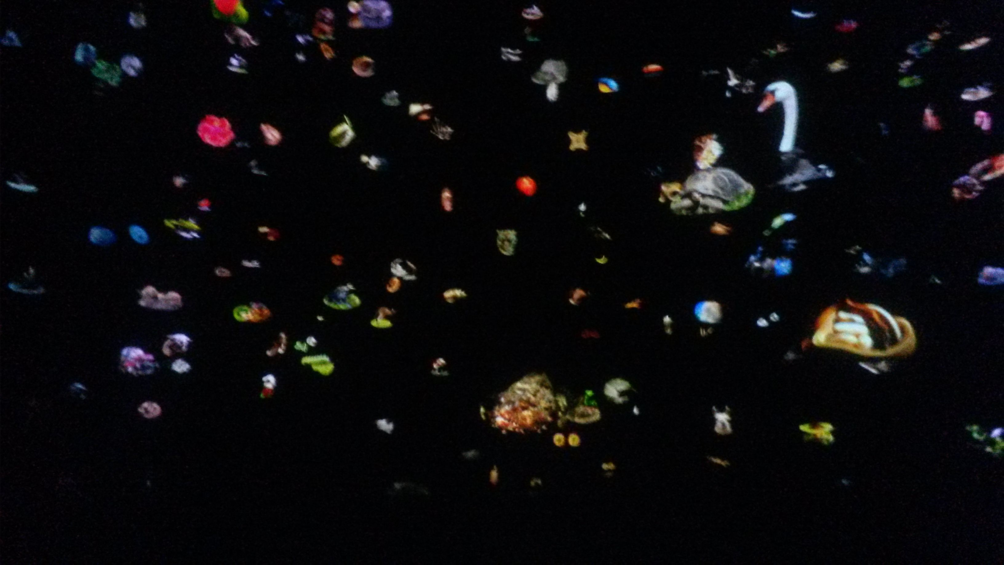 Animals and lights. Venice. Natural Science Museum. AMAZING!