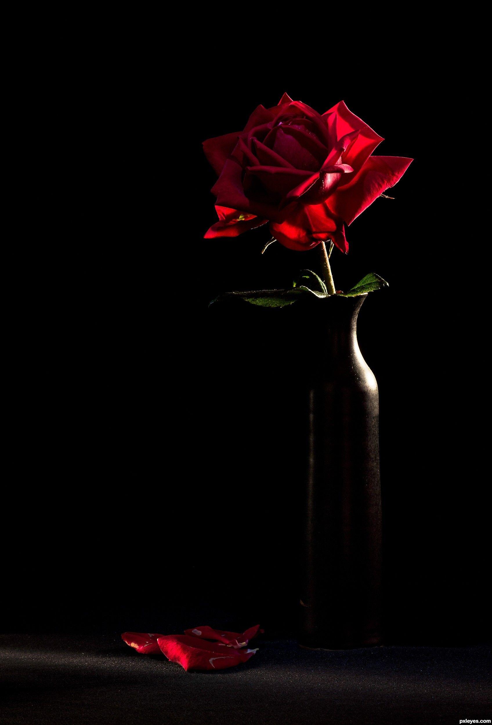 Pin Oleh Moto I Di Roses Mawar Merah Mawar Hitam Fotografi Seni