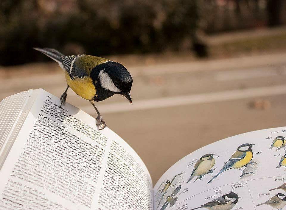özcan yüksek on | Cute birds, Birds, Bird watching