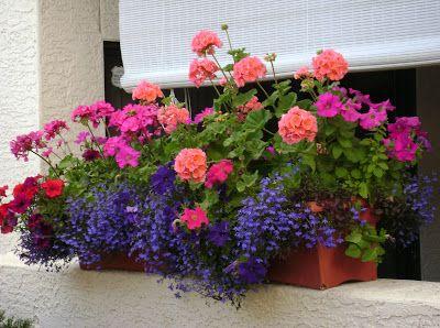 Kompozycje Balkonowe Ogrody Pamietajcie O Ogrodach Window Box Flowers Patio Flowers Flower Pots Outdoor