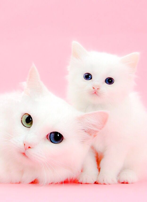 Pin By Trish Lamb On Animais Pretty Cats Cute Animals Beautiful Cats