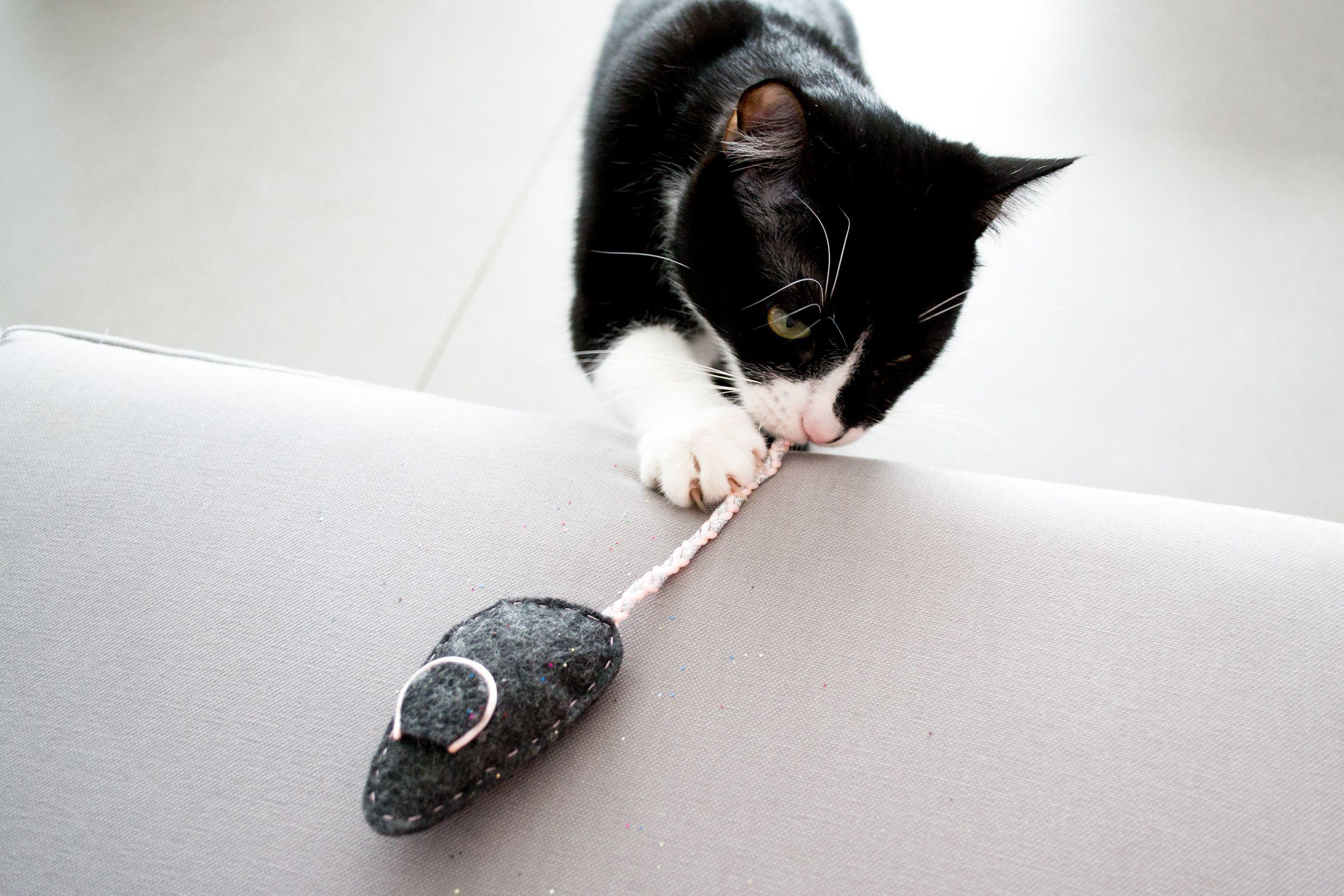 Diy souris pour chat en feutrine chaton pinterest for Attraper souris maison
