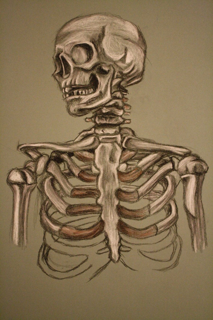 Skeleton Study Sketch By Adamhallart On Deviantart Sketches