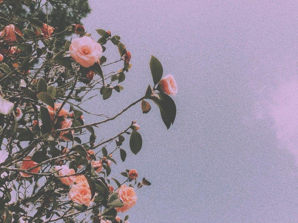 Avamatak Flower Aesthetic Aesthetic Backgrounds Flower Wallpaper