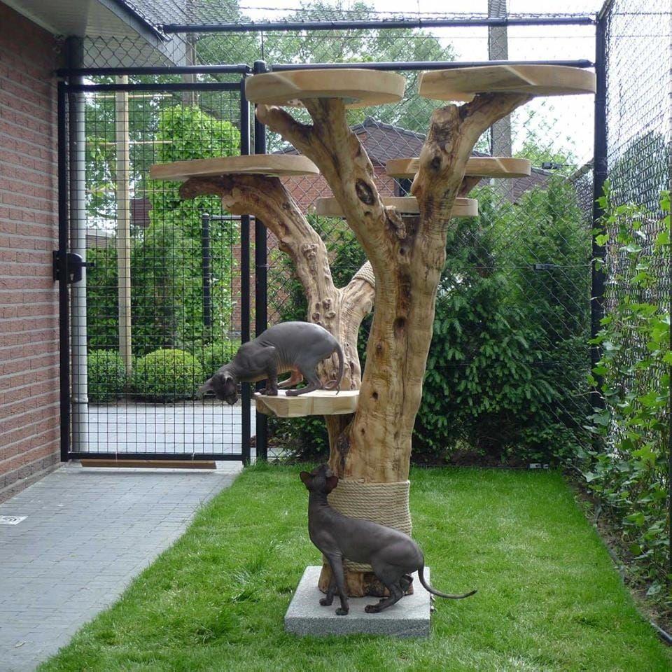 treeworld aus holland bietet super sch ne und starke kratzb ume aus richtiges holz unsere. Black Bedroom Furniture Sets. Home Design Ideas