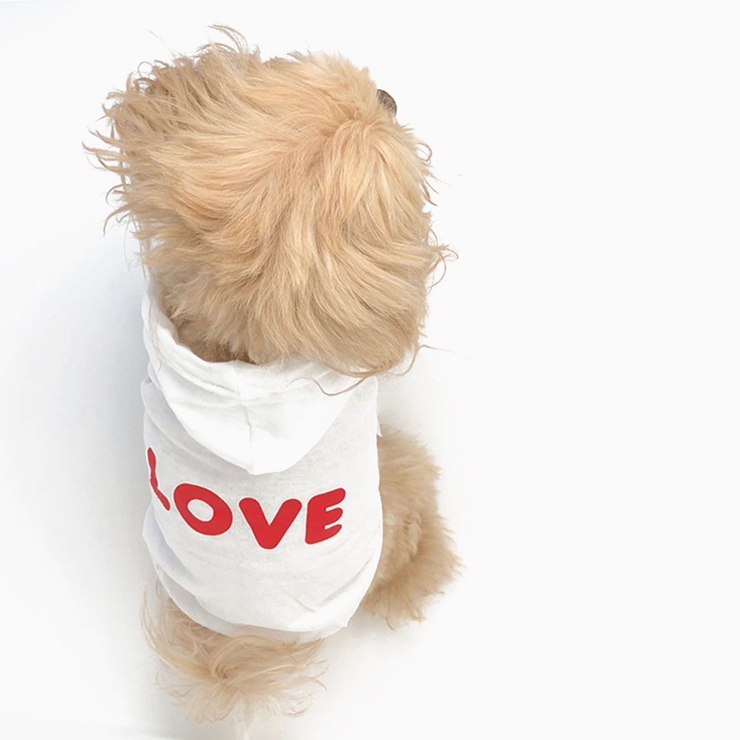 Happy V Day From Miamorepets Wishing You Lots Of Wet Kisses Miamore Valentines Valentines2020 Vale In 2020 Happy V Day Pet Sitters Pet Store