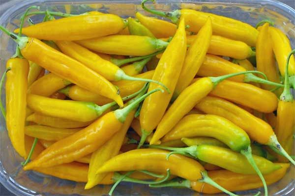 Aji Bolivian Yellow Capsicum baccatum Schärfe 6-7