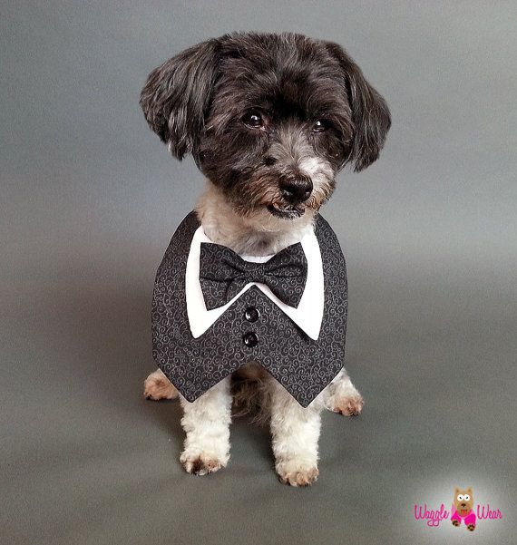 Black And Grey Paisley Dog Tuxedo With Bow Tie Dog Tuxedo Dog Tux Grey Dog