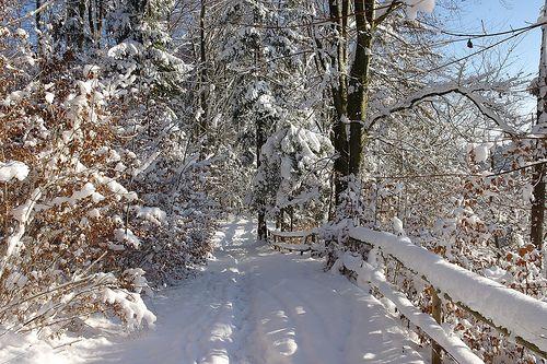 Kurzurlaub Winter in München und ein Spaziergang im Forstenrieder Park - Wenn der Schnee glitzert, der Himmel blau erstrahlt und die Schritte im frischen weiß knirschen, ist der Winter wunderbar. Erleben Sie diese Bilderbuchromantik hautnah und verbringen Sie ein paar erholsame Tage Urlaub in Oberbayern im 3-Sterne-Hotel in München Süd. Herzlich Willkommen im Waldgasthof Buchenhain