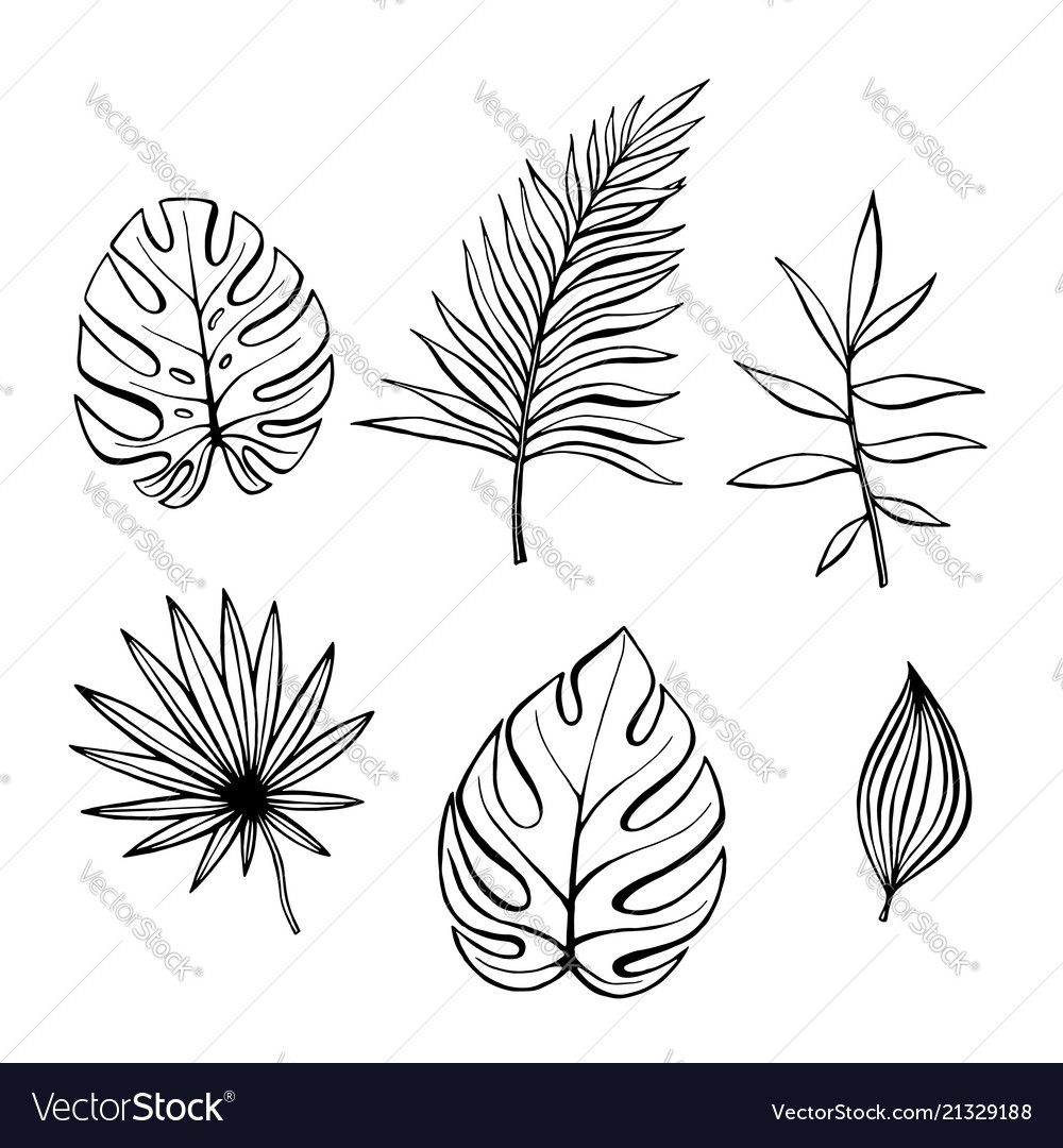 Hand Drawn Branches And Leaves Of Tropical Plants Vector Image On Vectorstock Leaf Drawing How To Draw Hands Plant Vector It's high quality and easy to use. pinterest