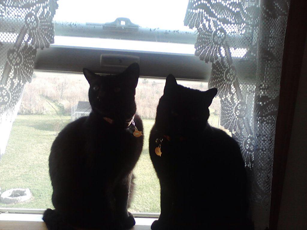 Binx and Khoda