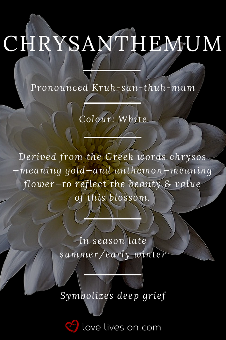 You Are Being Redirected Flower Meanings Chrysanthemum Meaning Funeral Flowers