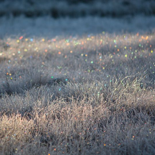 Tiina Törmänen Sparkling frost prisms.  Oct 2015, Southern Lapland, Finland.  http://tiinatormanenphotography.tumblr.com/