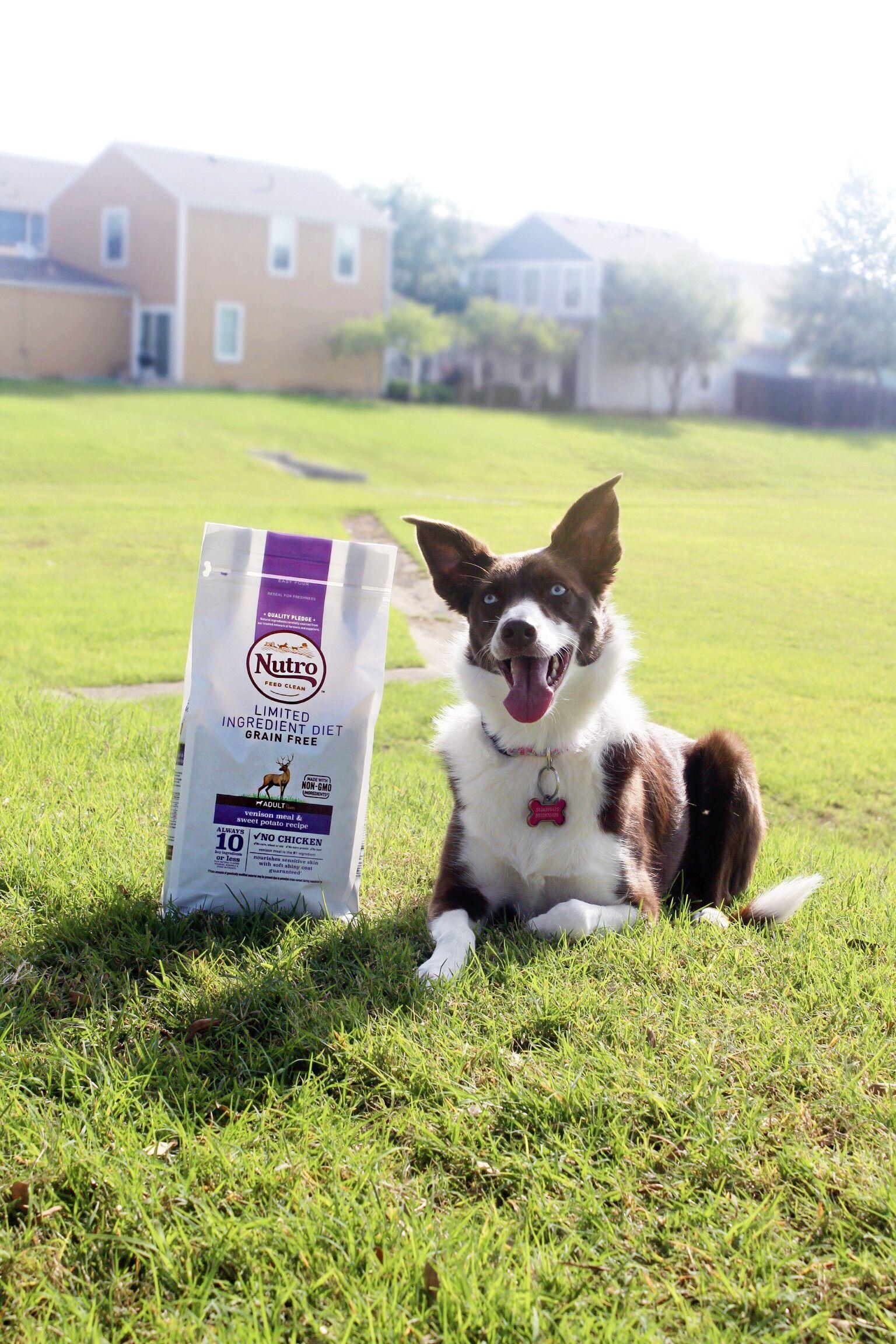 Nutro dog food ad nutro dog food dog food recipes