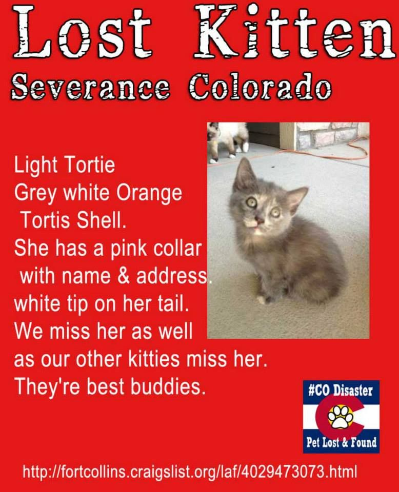 Craigslist Fort Collins Co Pets - PetsWall