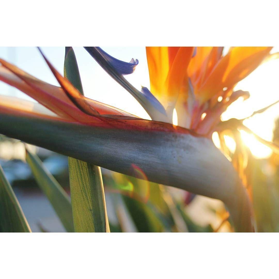 プリティベビー  プリティベビー  #composition#contrast#35mm#50mm#filmphotography#film#justgoshoot#aperture#artofvisuals#premiumposts#perspective#instadaily#details#vscophile#vscocam#vsco#instadaily#details#design#travel#vscophile#vscocam#vsco#california#sandiego#tropical by cocoasetsstuffonfire