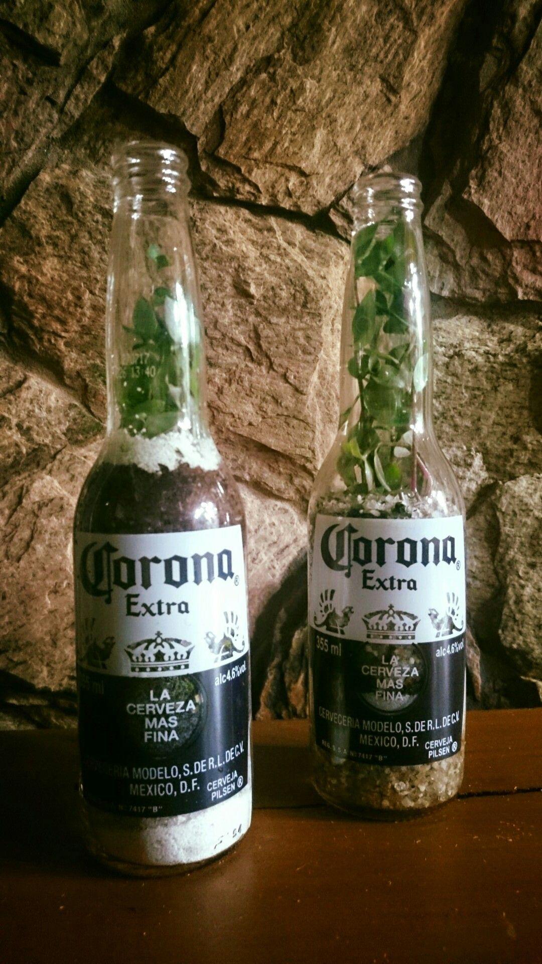 Terrário na garrafa