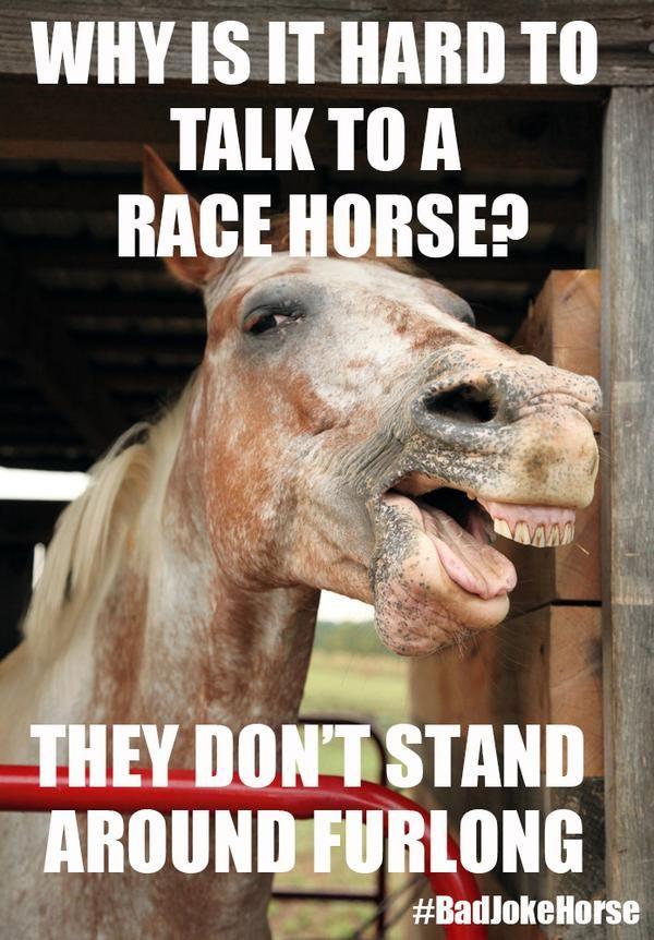 Horse Jokes: 10 Best | Laugh Out Loud