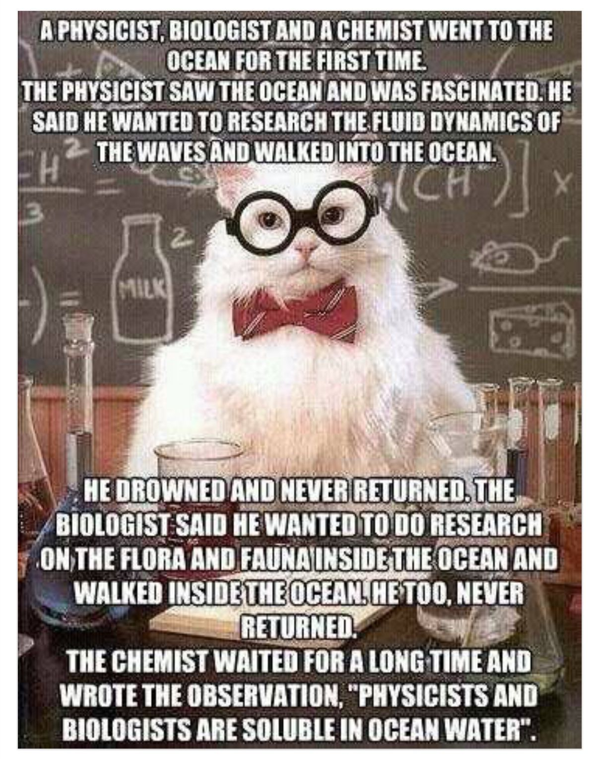 Pin by Cindy Knaub on Cats (With images) Chemistry humor