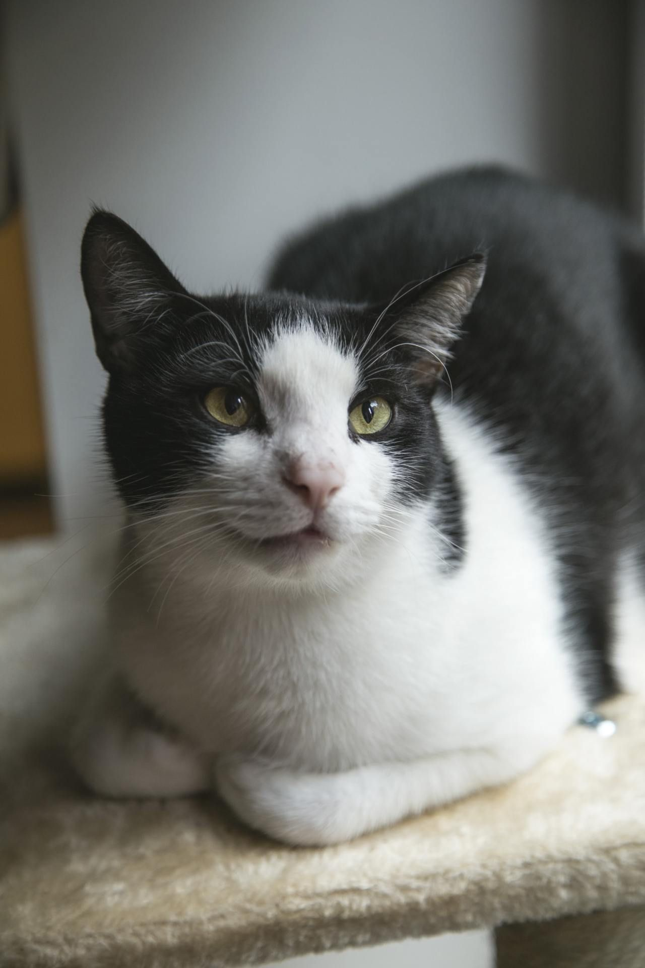 Cats Cat Kitten Cute Kitty In 2020 Fluffy Cat Breeds Fluffy