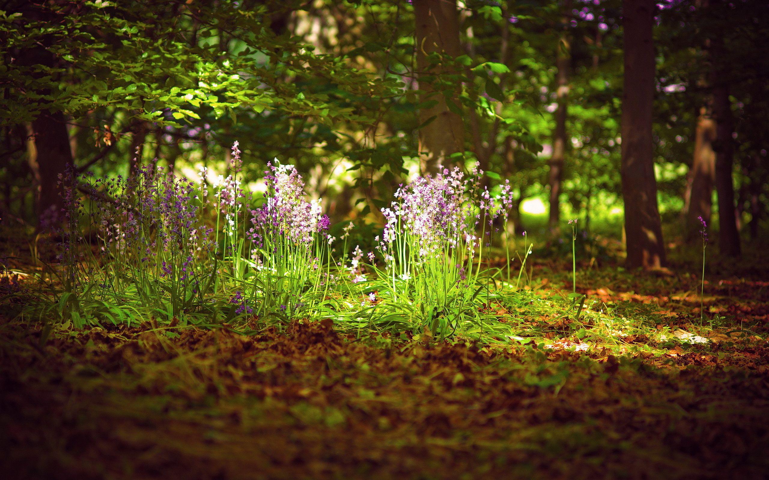 Image result for forest flower