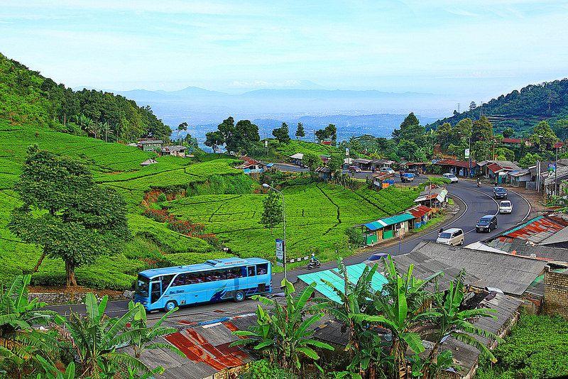 Puncak Bogor Jawa Barat Indonesia Natural Landmarks Landmarks