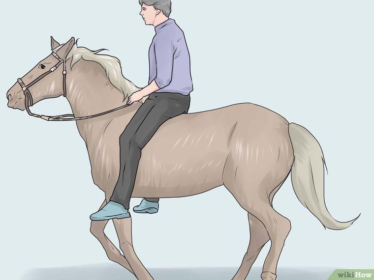 Простатит лошадь простатит лечение в чите
