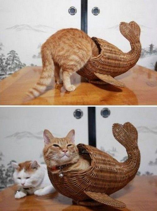 kitty makes the perfect mermaid.