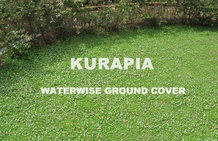 Kurapia Low Water Lawn Hydroseeding Grasses Landscaping Low Water Grass Alternative