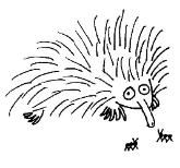 Porcupine Mask Coloring Pages Coloring Pages Animal Masks For