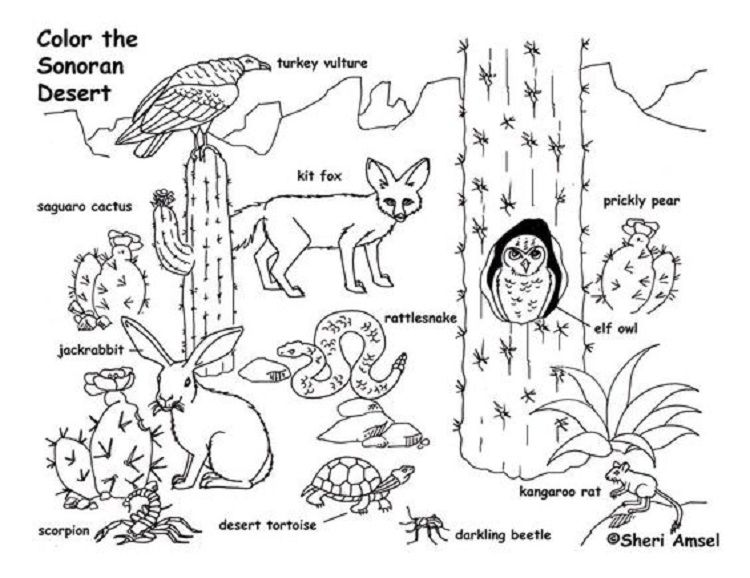 Desert Animal Coloring Pages Designs Trend