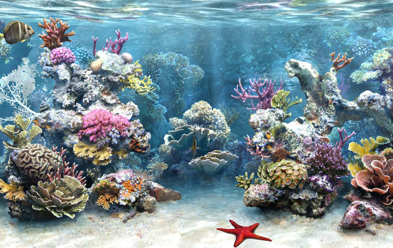 Undersea Life Aquarium Backgrounds Aquarium Screensaver Tank Wallpaper