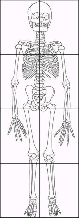graphic relating to Printable Skeleton Bones referred to as Pin upon Science