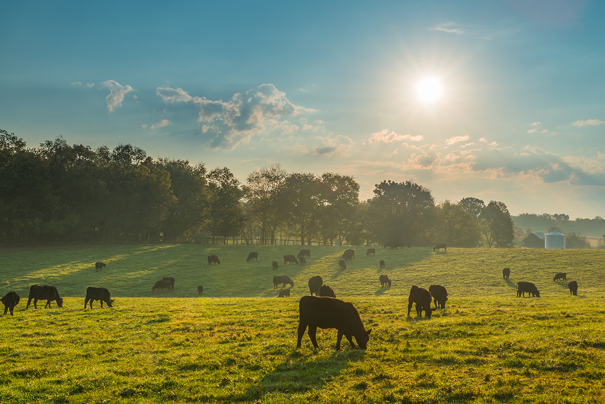 Grazing Toward a Sustainable Beef Supply Chain in 2020