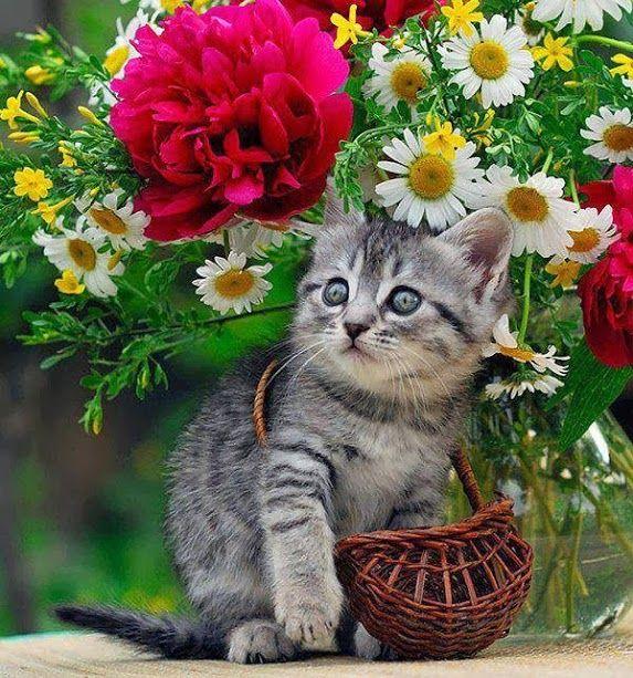 Pequeno Gatinho entre as flores