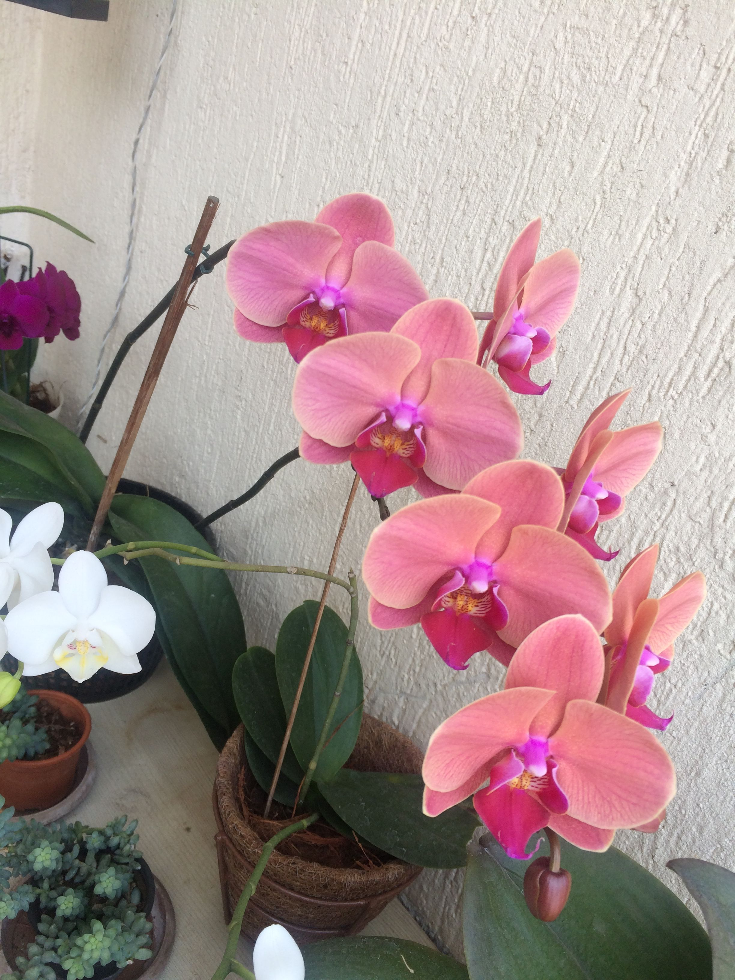 My orchids Flowers Pinterest Orchids and Flowers
